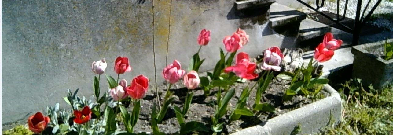 Fleurs Denise